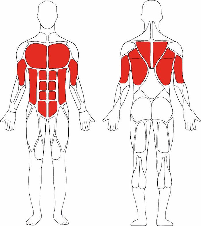 Ausgezeichnet Muskelgruppen Anatomie Fotos - Anatomie Ideen ...