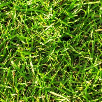 Oberfläche Rasen
